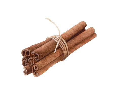 Watercolor aromatic cinnamon sticks isolated on white background.