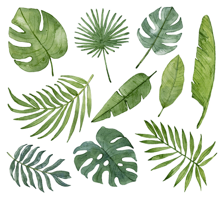 Watercolor tropical leaves isolated on white background. Exotic leaves, banana leaves, palm leaves, monstera leaves.