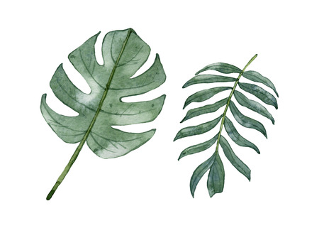 Watercolor green tropical leaves isolated on white background. Monstera leaf, palm leaf.
