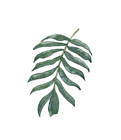 Watercolor green palm leaf isolated on white background.Tropical, exotic leaf.