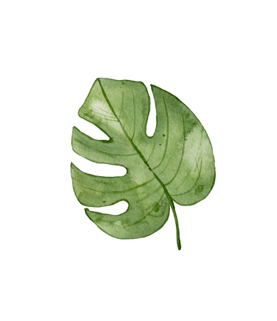 Watercolor green tropical leaf isolated on white background. Exotic leaf. Monstera leaf. Archivio Fotografico