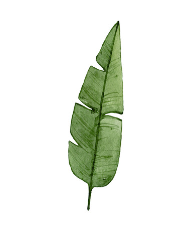 Watercolor green leaf isolated on white background. Tropical, exotic leaf. Archivio Fotografico
