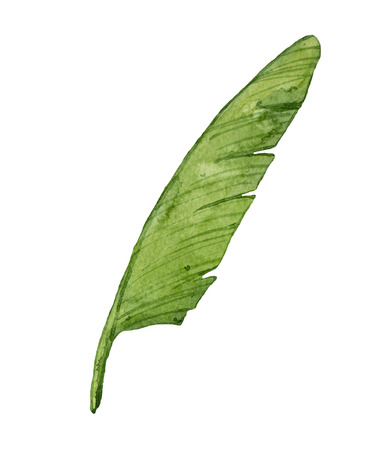 Watercolor banana leaf isolated on white background. Tropical, exotic, green leaf.