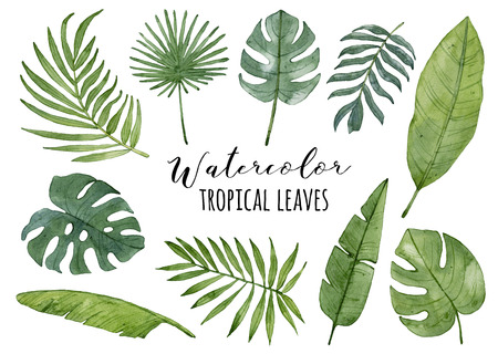 Watercolor tropical leaves set isolated on white background. Palm leaf, banana leaf, monstera leaf. Exotic, green leaves.
