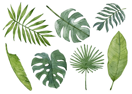 Watercolor tropical leaves isolated on white background. Palm leaf, banana leaf, monstera leaf. Archivio Fotografico
