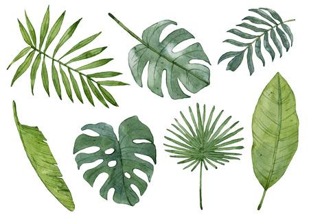 Watercolor tropical leaves isolated on white background. Palm leaf, banana leaf, monstera leaf. Zdjęcie Seryjne