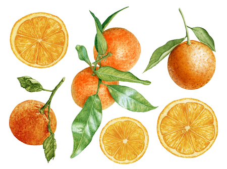 Watercolor ripe, fresh, juicy orange slices, oranges, tangerines with leaves isolated on white background. Tropical fruit.