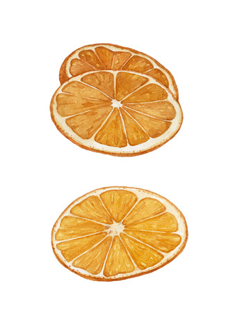 Watercolor juicy, ripe orange slices isolated on white background. Cut oranges.