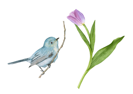 Watercolor blue bird sitting on the twig, purple tulip with leaves isolated on white background.