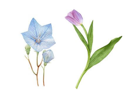 Watercolor bluebell, flower bud, purple tulip with leaves isolated on white background.