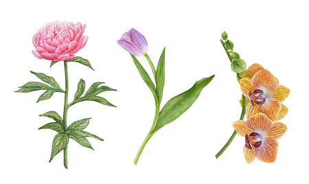 Watercolor beautiful, exotic flowers isolated on white background. Yellow orchid flowers, pink peony, purple tulip with leaves. Archivio Fotografico