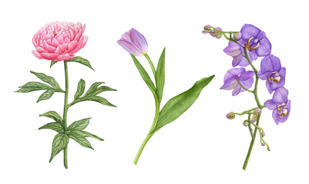 Watercolor beautiful, exotic flowers isolated on white background. Violet orchid flowers, pink peony, purple tulip with leaves. Archivio Fotografico