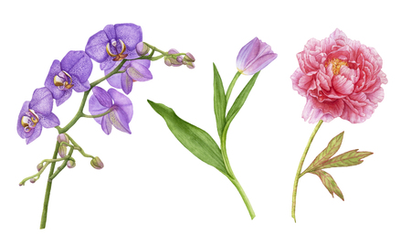 Watercolor beautiful flowers isolated on white background. Violet orchid flowers, purple tulip with leaves, pink peony.