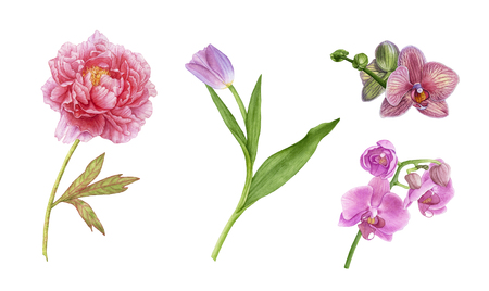 Watercolor beautiful, exotic flowers isolated on white background. Pink orchid flowers, purple tulip with leaves, pink peony. Archivio Fotografico