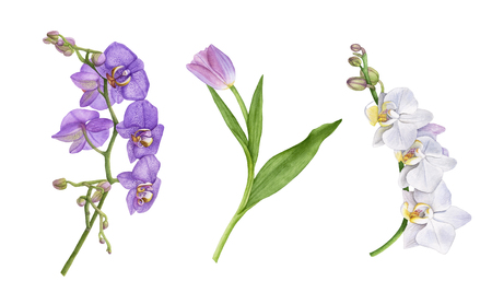 Watercolor beautiful, exotic flowers isolated on white background. Violet and white orchid flowers, purple tulip with leaves. Archivio Fotografico