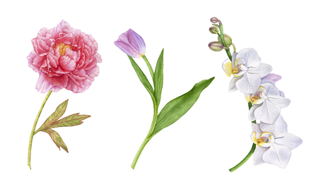 Watercolor beautiful flowers isolated on white background. White orchid flowers, purple tulip with leaves, pink peony.