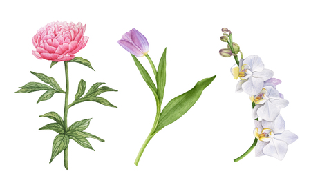 Watercolor beautiful flowers isolated on white background. White orchids, purple tulip, pink peony with leaves.