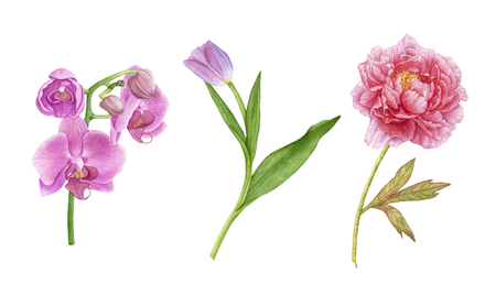 Watercolor beautiful summer flowers isolated on white background. Pink orchids, purple tulip with leaves, pink peony.