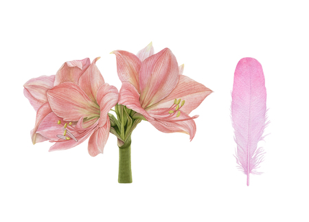 Watercolor pink flowers, isolated on white background. Archivio Fotografico