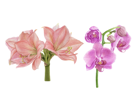 Watercolor beautiful, exotic flowers. Pink orchids, amaryllis isolated on white background.