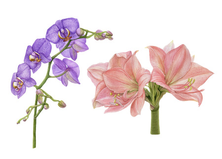 Watercolor flowers. Purple, pink orchids isolated on white background. Archivio Fotografico