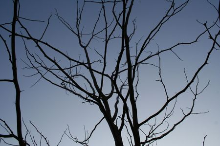 Bare branches at dusk. Stock Photo - 1990109