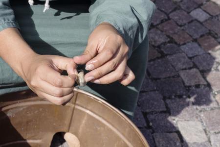 silkworm: Processing of the silkworm Stock Photo