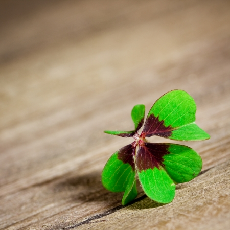 clover Stock Photo - 24486221