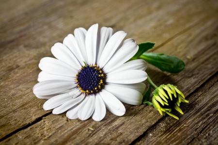 auszeit: flowers