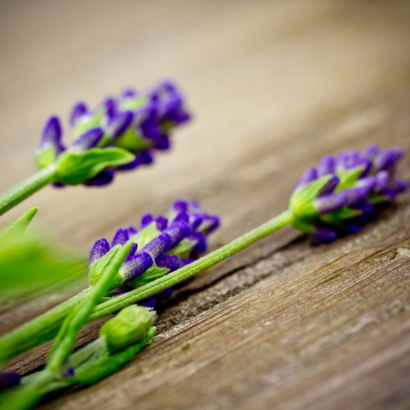 auszeit: lavender Stock Photo