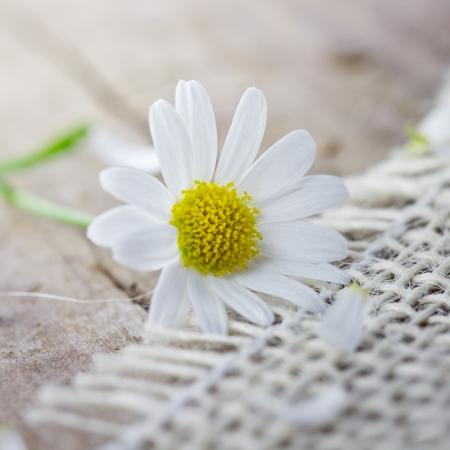 auszeit: flower