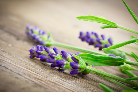lavender 版權商用圖片