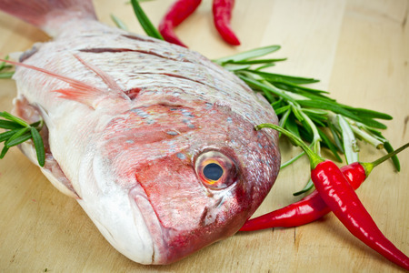 gilthead: gilthead on wooden background