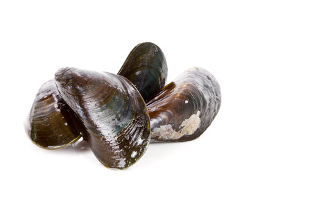 fresh mussels isolated Stock Photo - 51062018