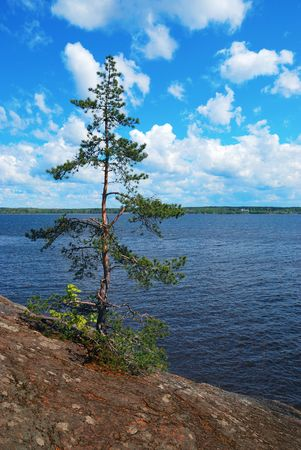Be single pinetree on a stone bank. Stock Photo - 4959018