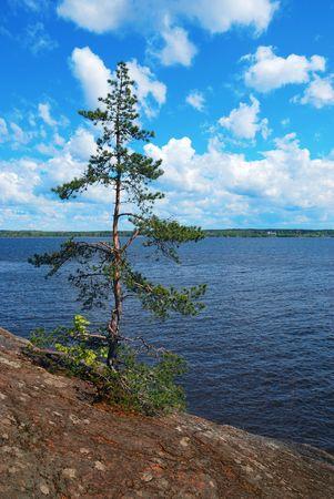 Be single pinetree on a stone bank. Stock Photo - 4959018