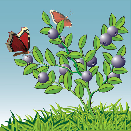 whortleberry: Bush of whortleberry with a butterfly.