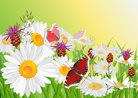 Summer, flowers, butterfly. Vector