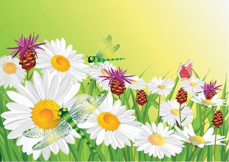 Summer flower. Illustration
