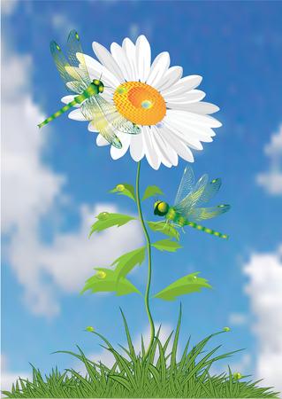 Summer flower. Vector