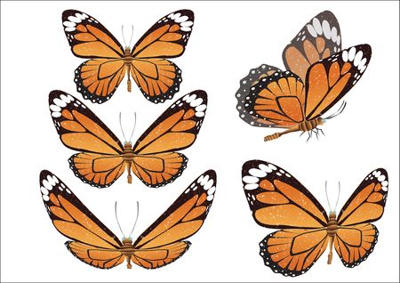batterfly: Batterfly.