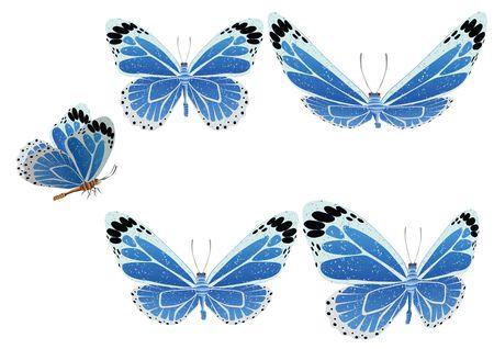 Batterfly.  Vector