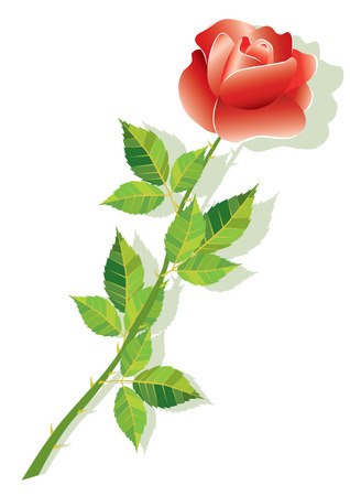 A flower is a rose.  Illustration