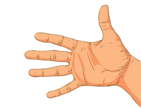 dessin au trait: Main isol� sur un fond blanc.