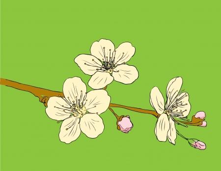 stylistic: Design floral element. Vector illustration.