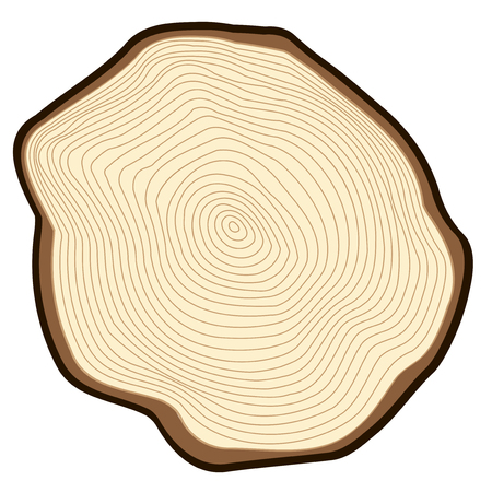rings on a tree cut: Cut of a tree, visible annual rings.