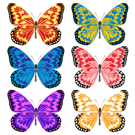 pleased: multicolored butterflies. Insects pleased with its appearance and color.