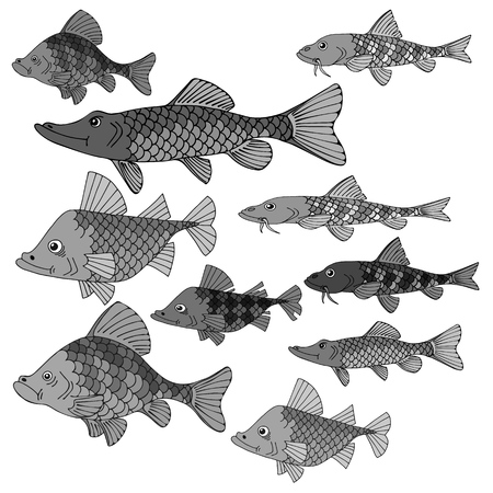 Set of sea fish. Underwater world. Great silence of the depths. Vector illustration in gray colors. Ilustracje wektorowe