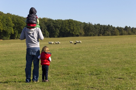 Family watching running sheep photo