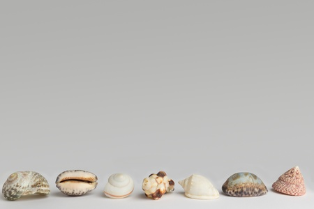 clam; conch; mussel; shell, frame, background photo